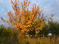 Autumn - 27 (2009). (15667105433).jpg