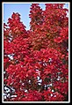 Autumn Leaves begin to fall-014 (5660262363).jpg