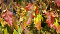 Autumn colour (10311552835).jpg