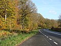 Autumn colours by the A4136 in the Forest of Dean - geograph.org.uk - 1571634.jpg