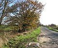 Autumn colours on Semere Lane - geograph.org.uk - 1596032.jpg