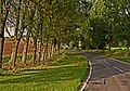 Avenue of Trees - geograph.org.uk - 242222.jpg