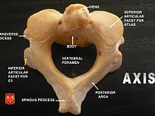 Axis (anatomy) - Wikipedia