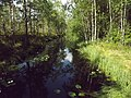 Bäck genom skogen vid Savojärvi 2019.jpg