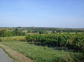 Barzan, Charente-Maritime - Hilly landscape around Barzan