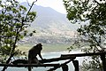 Bali monkey with fields and water 3.JPG