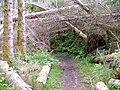 Balmacara Woodland Walk - geograph.org.uk - 512259.jpg