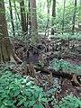 Battle Creek Cypress Swamp 46.jpg