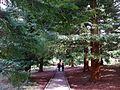 Bedgebury Pinetum 2.jpg