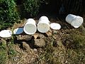 Bees in plastic pails at Hillview Farms in New Jersey.jpg