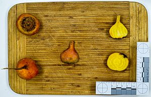 Beetroot - Fruit and cross section, yellow cultivar