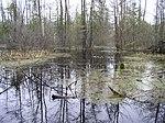 Belarus-Peat Mining near Rudzensk-Swamp-2.jpg