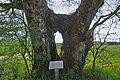 Beneuvre FR21 arbres IMF4597.jpg