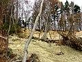 Bergrutsch 2010 - panoramio.jpg