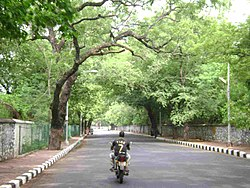 Road in Besant Nagar