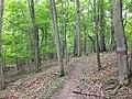Beulah Trail.JPG