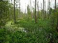 Białowieża National Park, Poland (4663910865).jpg