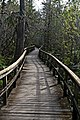 Big Cypress Bend Boardwalk (6849875475).jpg