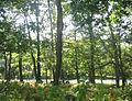 Big Meadows Woods.jpg