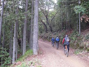 Trail riding - Mountain biking on Mount Tamalpais, California, USA
