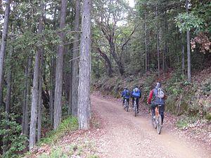 Trail riding - Mountain biking on Mount Tamalpais, California, USA