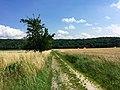 Blick auf den Steinberg - panoramio.jpg