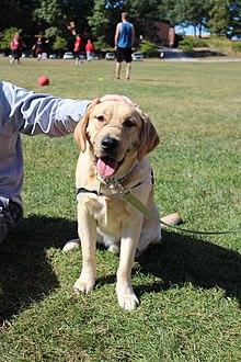 Image Result For Dog Training Manchester