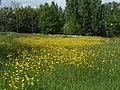 Bloemrijk grasland.JPG