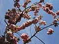 Blossom (300845844).jpg