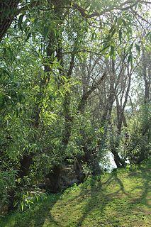 Blucher Creek stream in Sonoma County, California