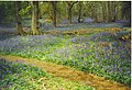 Bluebells at Winkworth Arboretum. - geograph.org.uk - 136566.jpg