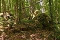 Bois des Roches Souzy-la-Briche n1.jpg
