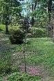 BotGardenFomin DSC 0199-1.jpg