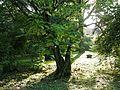 Botanični vrt (3990155655).jpg