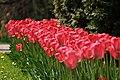 Botanic garden - Cluj-Napoca (5677413326).jpg