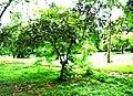 Botanic garden limbe25.jpg