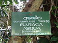 Botanical Garden of Peradeniya 52.JPG