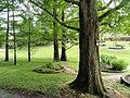 Botanischer Garten Freiburg - DSC06392.jpg
