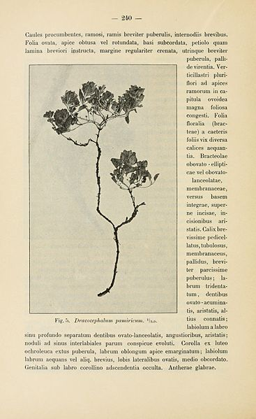 File:Botanisk tidsskrift (Page 240) BHL5149175.jpg