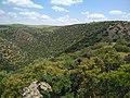 Bouachouch forest. Ait mimoun. Khemisset 2.jpg