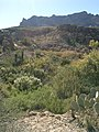 Boyce Thompson Arboretum, Superior, Arizona - panoramio (17).jpg