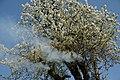 Brandeisatz Baum Flur Böschung (41526077622).jpg