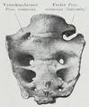 Braus 1921 79.png