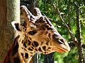 Brevard Zoo, Viera FL - Flickr - Rusty Clark (70).jpg