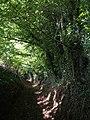 Bridleway, Horsecombe - geograph.org.uk - 1523589.jpg