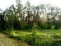 Brodivs'kyi district, Lviv Oblast, Ukraine - panoramio (141).jpg