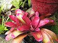 Bromeliad5.jpg
