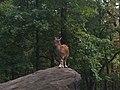 Bronx Zoo - New York - USA - panoramio (16).jpg