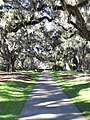 Brookgreen Gardens - Live Oak Allee'.jpg