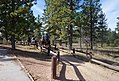 Bryce Canyon Horse trail (1).JPG